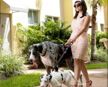 woman-walking-dogs-large-neighborhood-glamorous