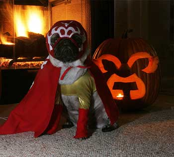 dog halloween costume wrestler