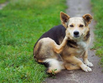 How To Treat Skin Disorders and Hair Loss In Dogs