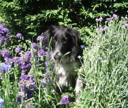 dog laying in flowers