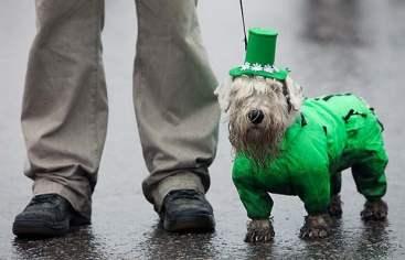 Irish Dogs 4