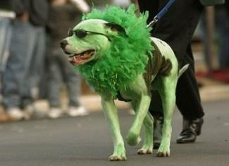 Irish Dogs 6