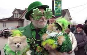 Irish Dogs 8