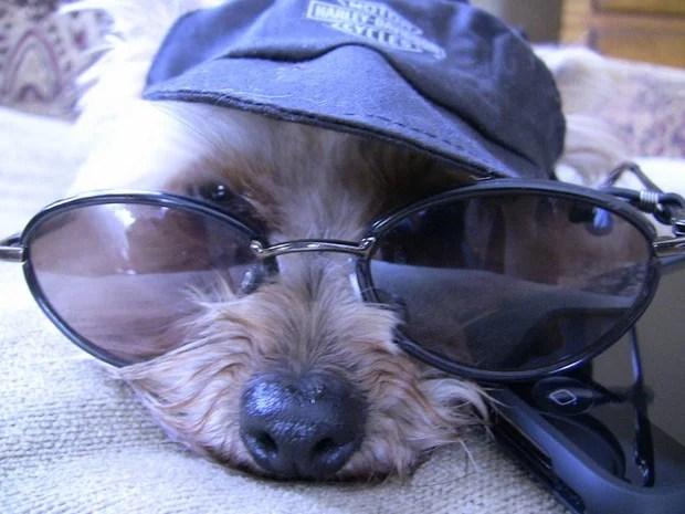 Sunglasses Dogs