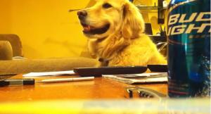 guitardog