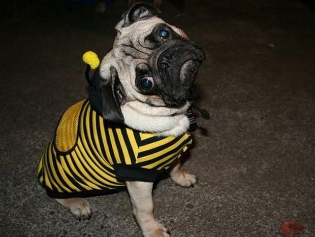 Bee_Costumes_1