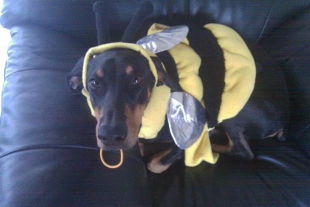 Bee_Costumes_3