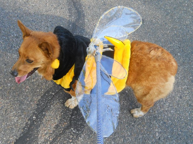 Bee_Costumes_5