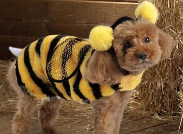 Bee_Costumes_6