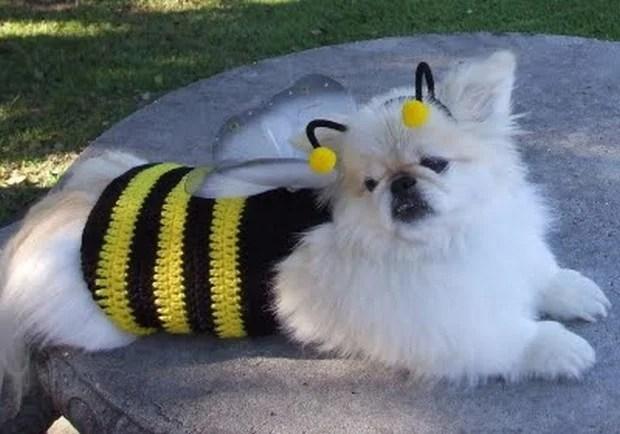 Bee_Costumes_9