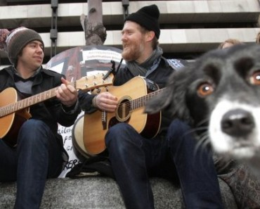 10 Really Funny Pictures of Dog Photobombs