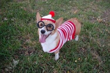 The Where's Waldo dog