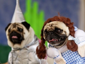 Wizard of Oz dogs