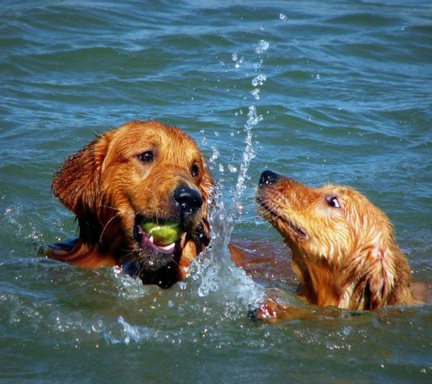 Dogs_In_Water_1