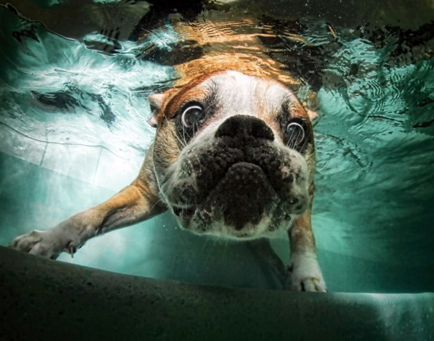 Dogs_In_Water_14