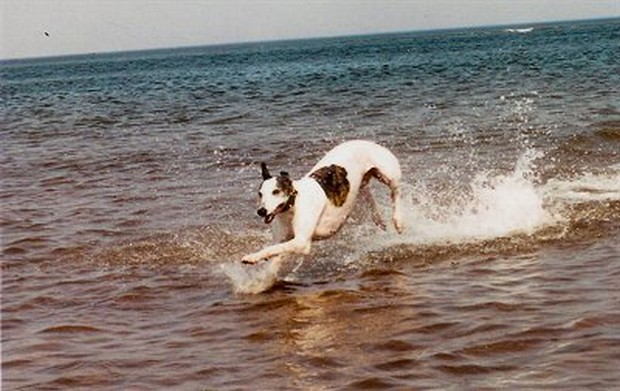 Dogs_In_Water_17