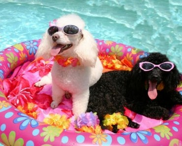 A Delightful Gallery of Dogs Playing in the Water