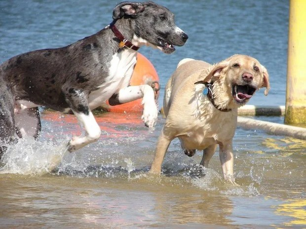 Dogs_In_Water_3