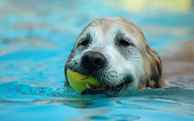 Dogs_In_Water_8