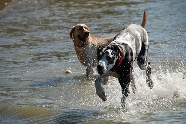 Dogs_In_Water_9