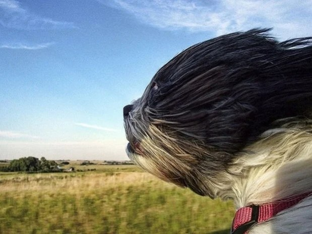 Dogs_In_Wind_10
