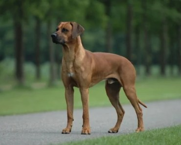 Twelve Great Dog Breeds to Protect You