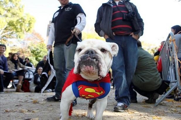 Superdog_10