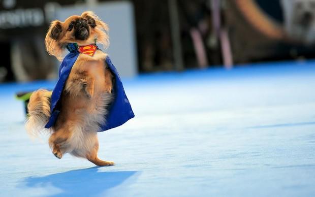 Superdog_11