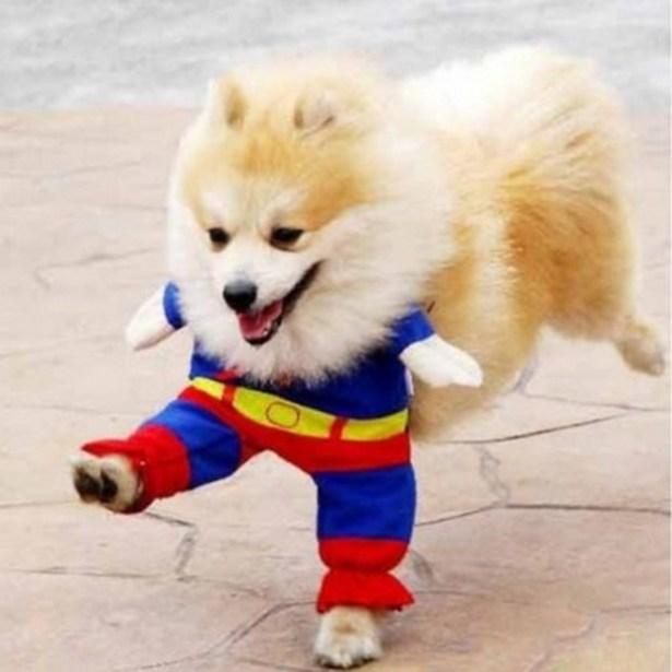 Superdog_2