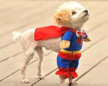 Dogs Wearing Superman Costumes