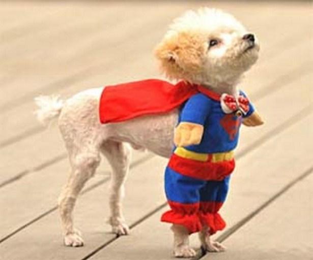 Superdog_3