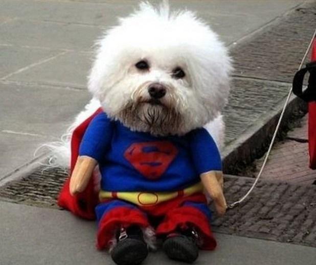 Superdog_4