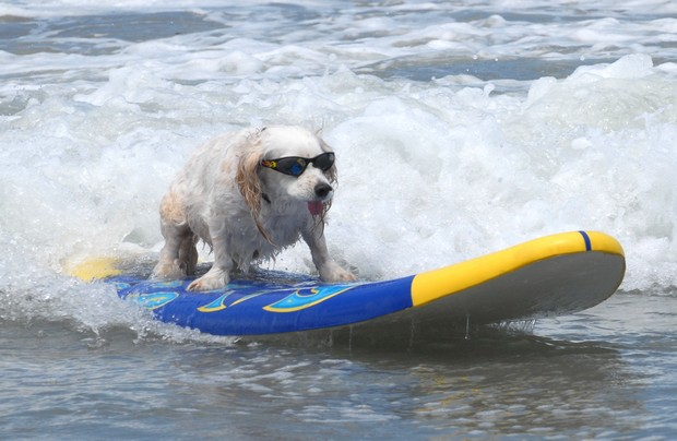 Surfing_Dogs_1