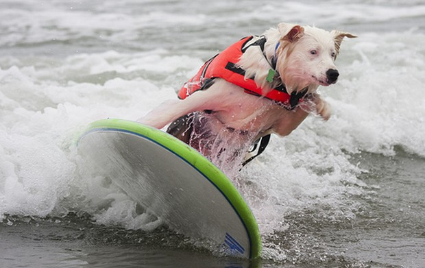 Surfing_Dogs_6