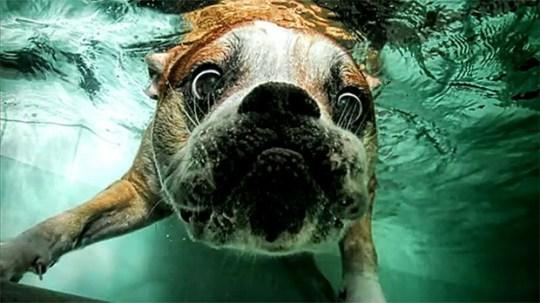 Underwater_Dog_10