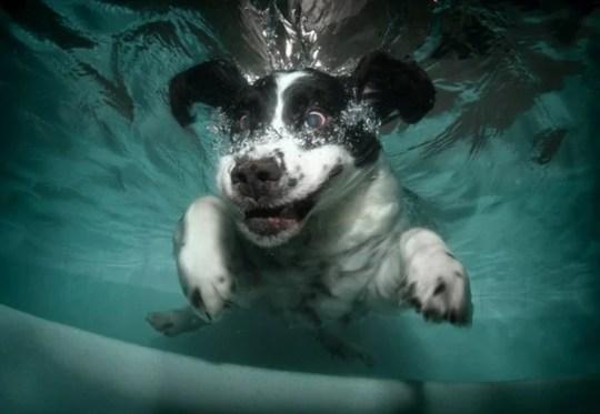 Underwater_Dog_12