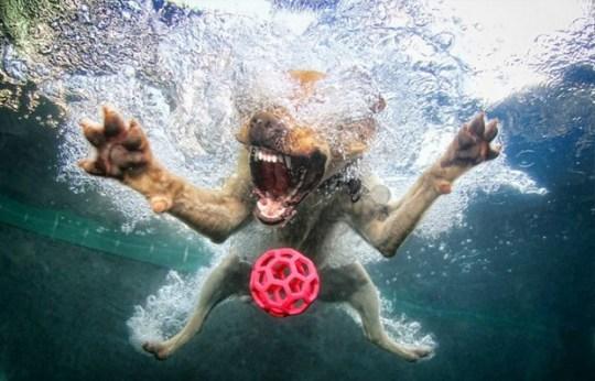 Underwater_Dog_3