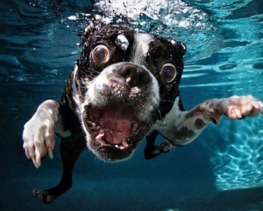 Dogs Make the Funniest Faces Underwater