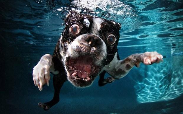 Underwater_Dog_4