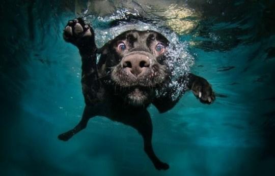 Underwater_Dog_6