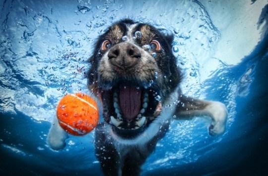 Underwater_Dog_9