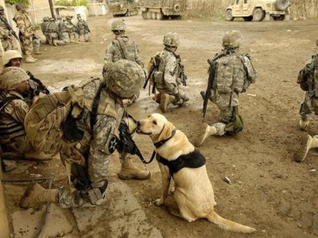 combat_dogs_11