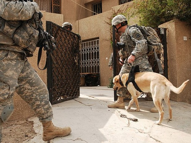 combat_dogs_2