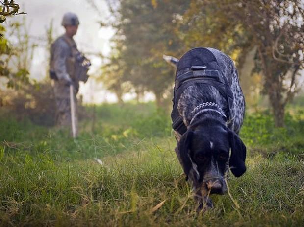 combat_dogs_6