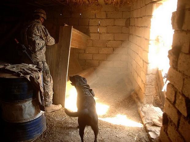 combat_dogs_8