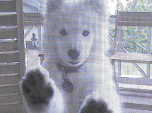 dog-pawproof-screen-door