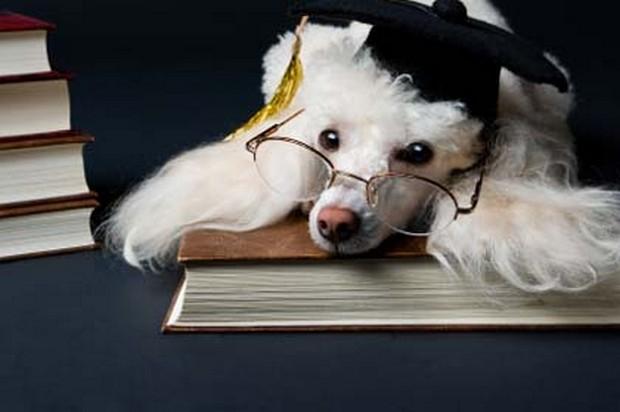 smart_dog_4