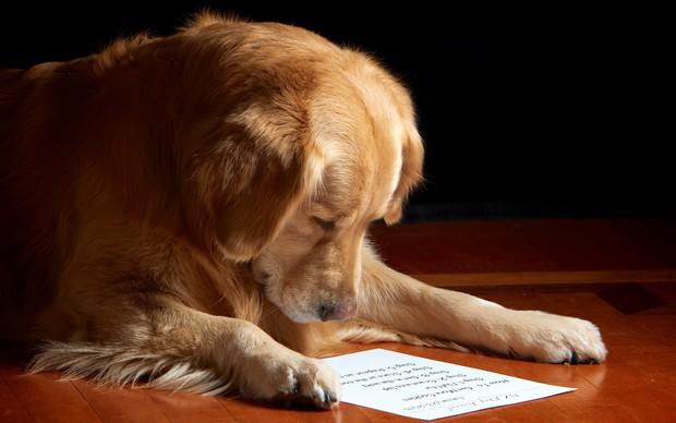 smart_dog_5