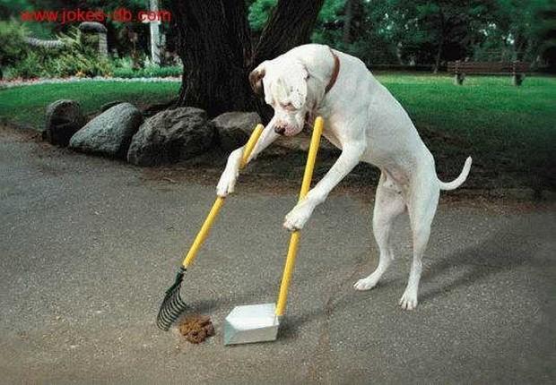 smart_dog_6