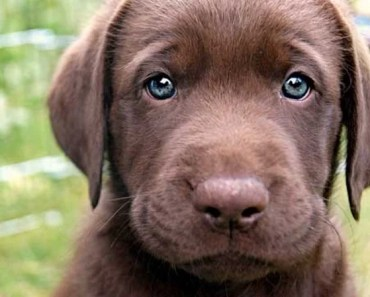 Beautiful Photos of Dogs with Blue Eyes